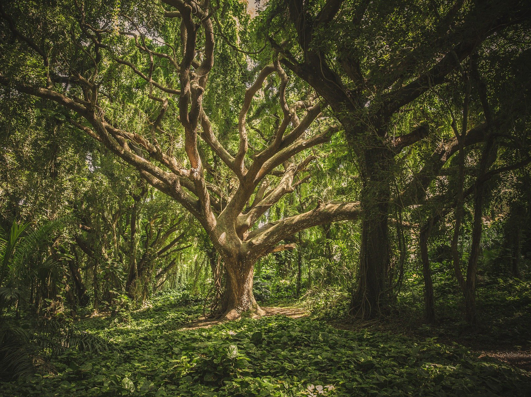 healthy_living_forest_trees